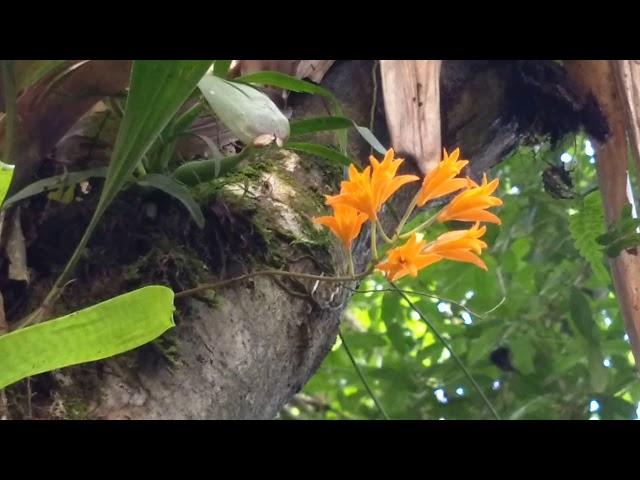 Orquídeas no habitat , uma grande variedade de plantas lindas