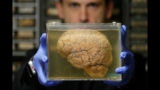 ученые назвали причину появления человека, опровергнув старую