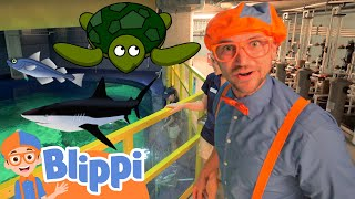 Learning Sea Animals With Blippi | Educational Videos For Toddlers | Animals For Kids