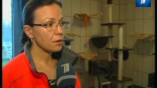 Таллиннском приюте для животных беспричинно усыпляют кошек(, 2013-11-30T21:04:53.000Z)