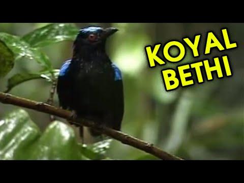 Koyal Bethi - Panetar - Songs - Gujarati Marriage Songs - Marriage Traditional Songs - Wedding Songs