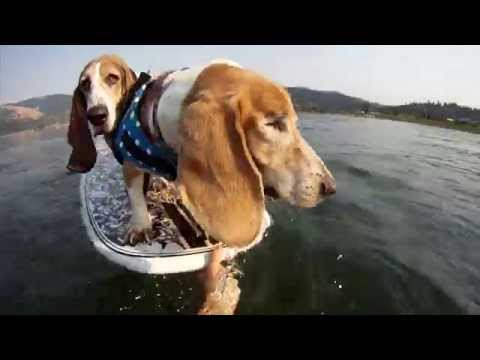 Swashbuckling surf dogs