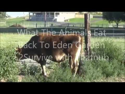 What The Animals Eat Back To Eden Garden L2Survive With Thatnub