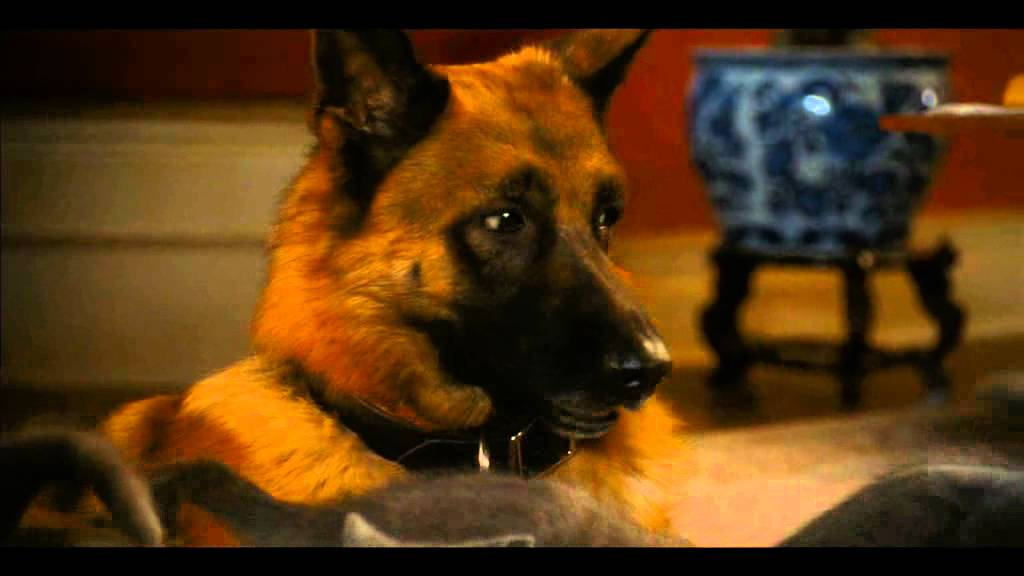 Cats and Dogs 2 , Movie Trailer