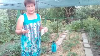 Чем опрыскать клубнику от клеща и от болезней после плодоношения  Не забудьте это сделать