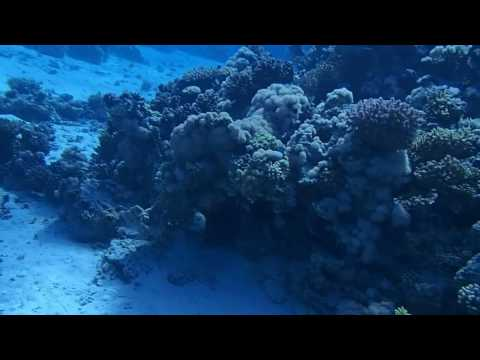 Red sea tank diving2