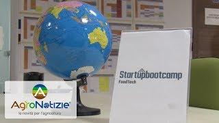 Startupbootcamp, l'innovazione dell'AgriFood