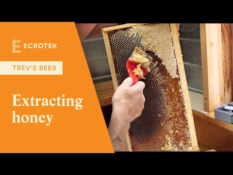 Trevs Bees - Extracting honey