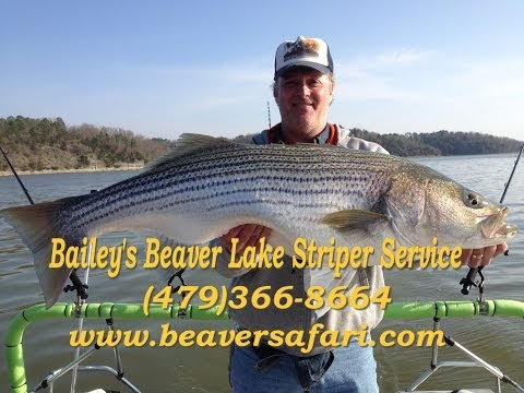 Big Striped Bass-Early Spring Striper On Beaver Lake Arkansas - Beaver Lake Striper Guide DIY