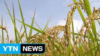 가공식품으로 쌀 소비 늘린다 / YTN (Yes! To…