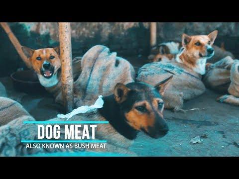 Dog Meat Market Nagaland India | Hornbill Festival 2017 | Vlog 3.1