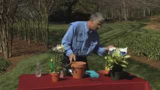 Walter Reeves – Houseplant Care Tips