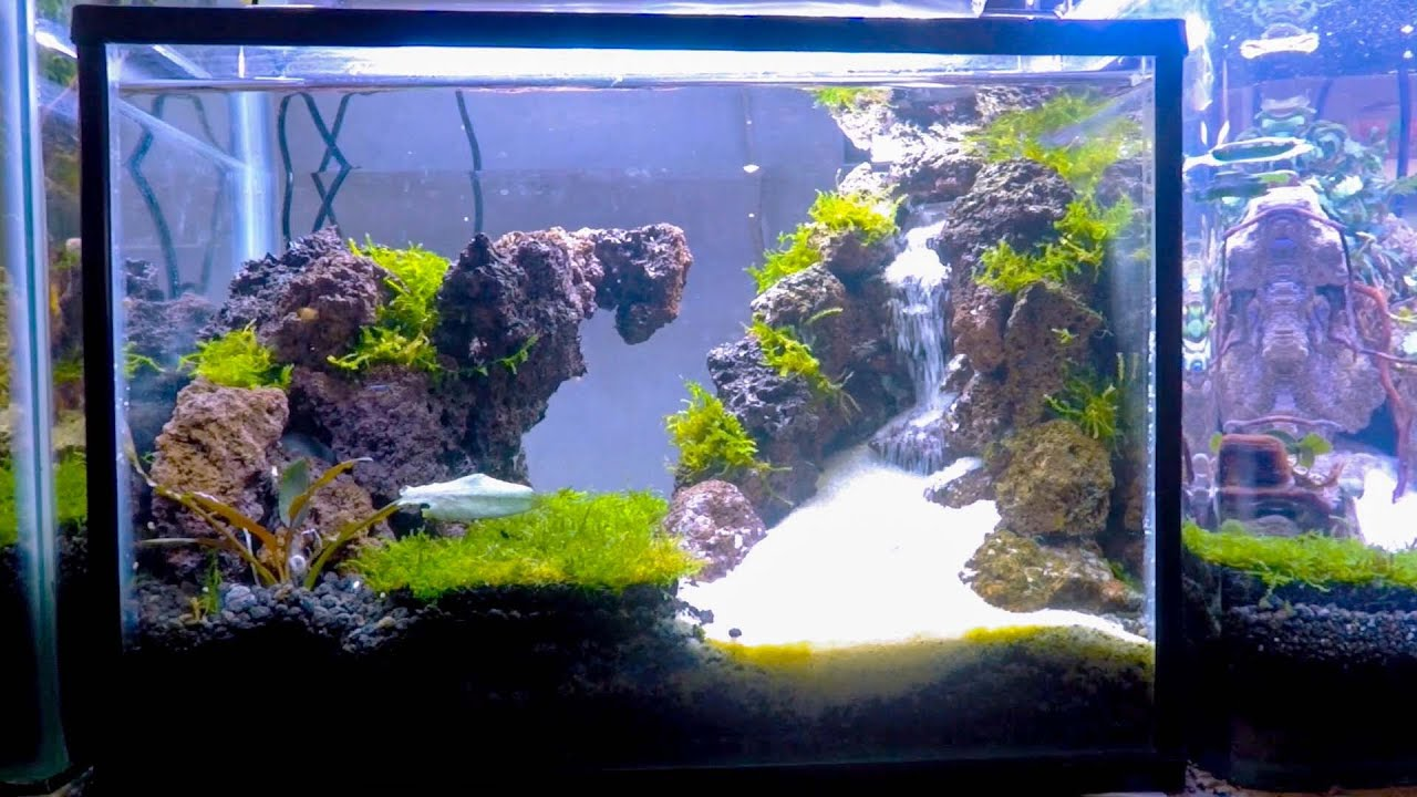 Sejuknya Aquascape Air Terjun Mini Aquarium Air Tawar Youtube