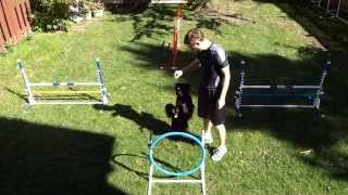 Agility Training & Aac Starters Jumpers Trial With Pomeranian-mix