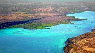 Tame Airline, Santa Cruz Island, Galápagos Islands, Ecuador, South America