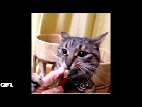 GIF's With Sound Mashup Compilation #51 FUNNY GIFS GIFS with sound 51 July 2014 GWS4all