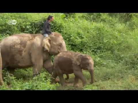 Laos - Saving Elephants | Global 3000