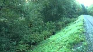 Karelian Bear Dog Vs Bear