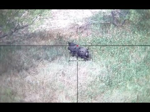 Finz and Featherz Texas Helicopter trip!  Thermal/night vision pig hunting