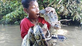 catch crocodile using duck