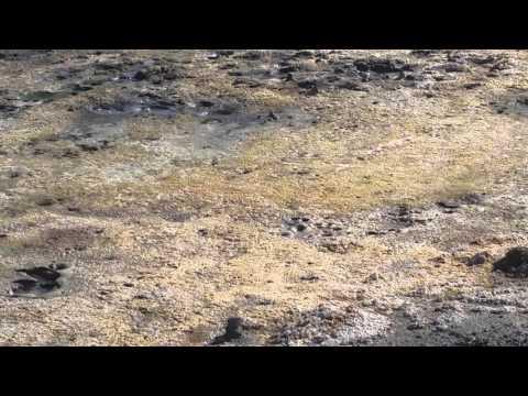 Bubbling hot mud pit.