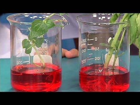 การทดลองรากและลำต้นของพืชทำหน้าที่อะไรบ้าง วิทยาศาสตร์ ป.4
