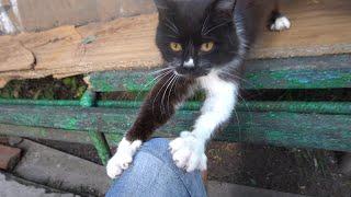 Cute black cat meow as always