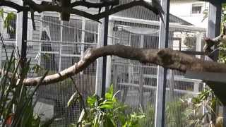 Large Aviary. Walk In Aviary Overview, Construction, Plantings, Birds @ Pheasantasiam