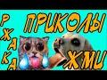 Подборка 🍓 ПРИКОЛОВ 2018 Приколы с животными, смешные коты, СОБАКИ! РЖАЧ. Funny Animals Compilation
