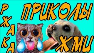 Подборка ПРИКОЛОВ 2018. Приколы с животными, смешные коты, СОБАКИ! РЖАЧ. Funny Animals Compilation.