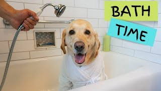 How to give a dog a bath | Dog Grooming