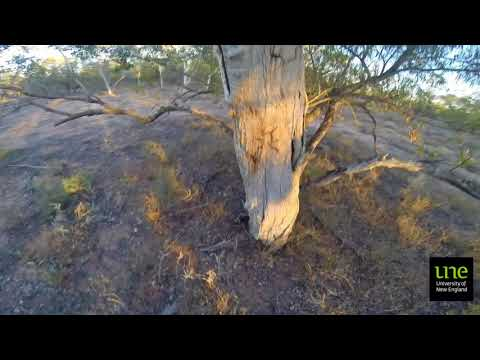 ARPA302 Aboriginal Archaeology at Narran Lakes, NSW, Australia