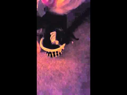My Cat Videos #1