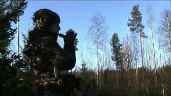 Variksen metsästys 2014
