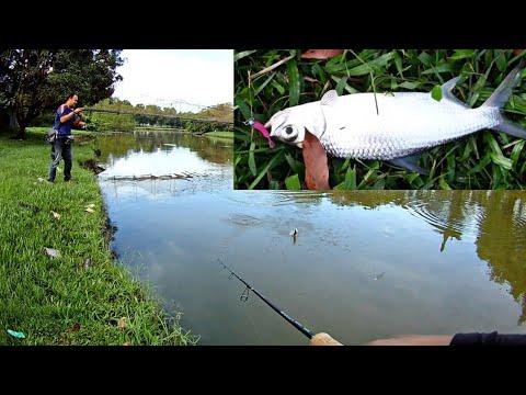 Casting Ikan Bulan (Tarpon) Titi Gantung | Ultralight Fishing