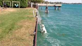 Dog Climbs Up Vertical Ladder After Jumping Into River - Oct 8, 2012