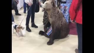 Выставка охота и рыбалка в Ростове-на-Дону