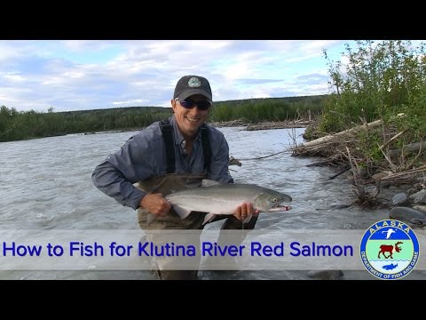 How To Fish For Klutina River Red Salmon