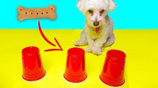 PICK THE RIGHT CUP CHALLENGE!! (PUPPY EDITION)