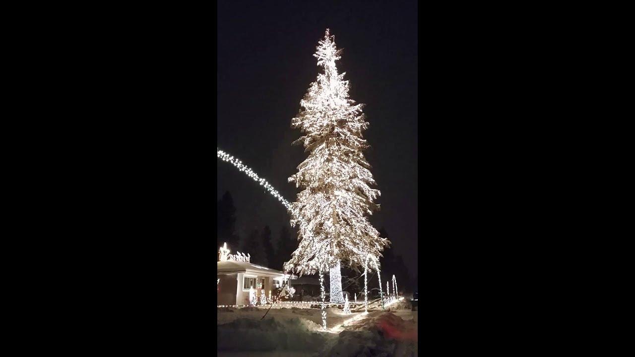 Stunning Christmas Tree Lights!
