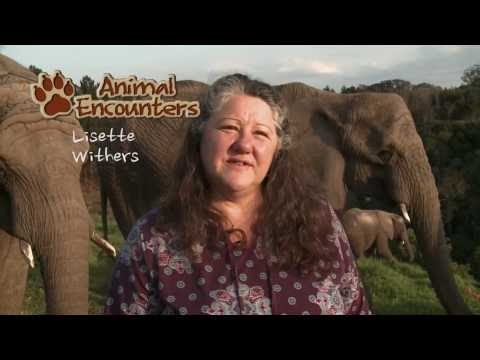Animal Encounters - Episode 1 Elephants