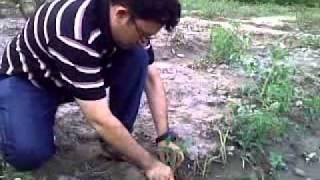 Sajid Sandhu  Tunnel Farming in Pakistan  Vegetable forcing   Farm at Kaghan