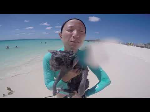 Aruba Adventure