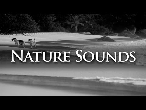 Nature Sounds | Stereophonic Ocean Waves