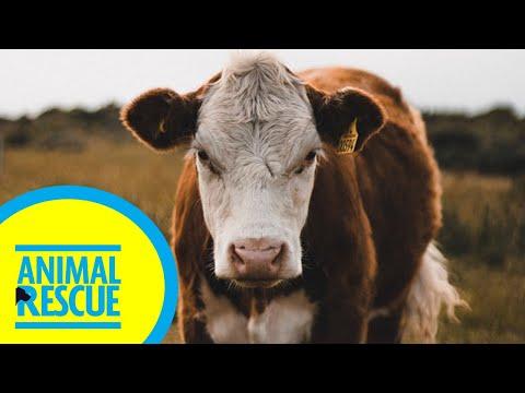 Animal Rescue - Season 2, Episode 15