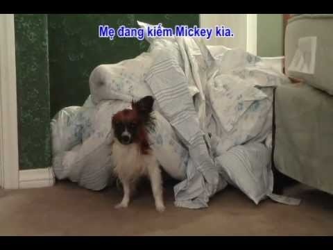 Papillon the Talking Dog - Dog Hides to Avoid Bath