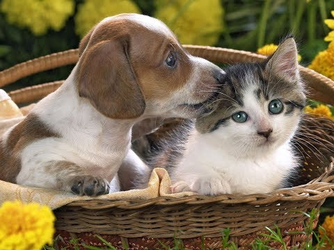 Cute Cats And Dogs - Adorable Cats Compilation