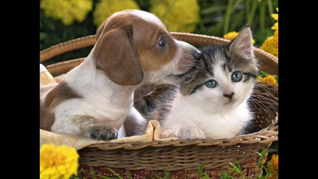 Cute Kitten Christmas Wallpaper Cute Cats And Dogs Adorable Cats Compilation Youtube