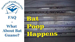 FAQ The Scoop on Bat Poop! Is it Harmful?