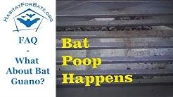 FAQ The Scoop on Bat Poop! Is it Harmful?